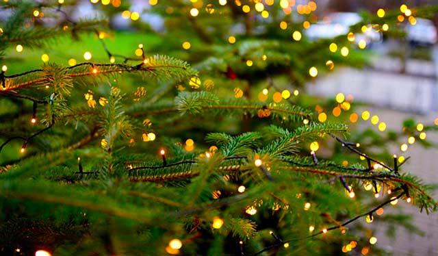 Außen Lichterkette mit Batterie am Tannenbaum