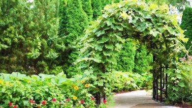 Photo of Kletterhilfen für den Garten