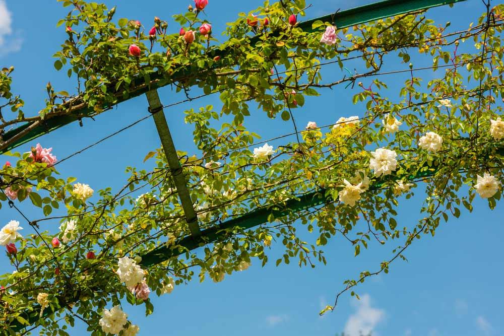 Blick nach oben auf den Rosenbogen depositphotos.com