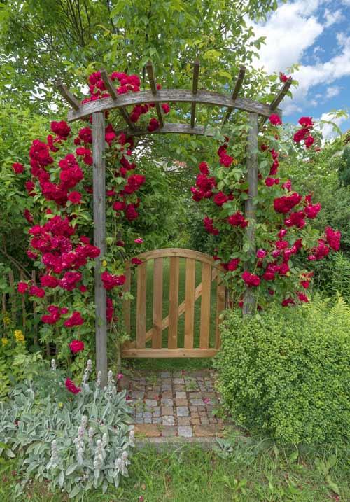 Rosenbogen mit Gartenpforte aus Holz depositphotos.com